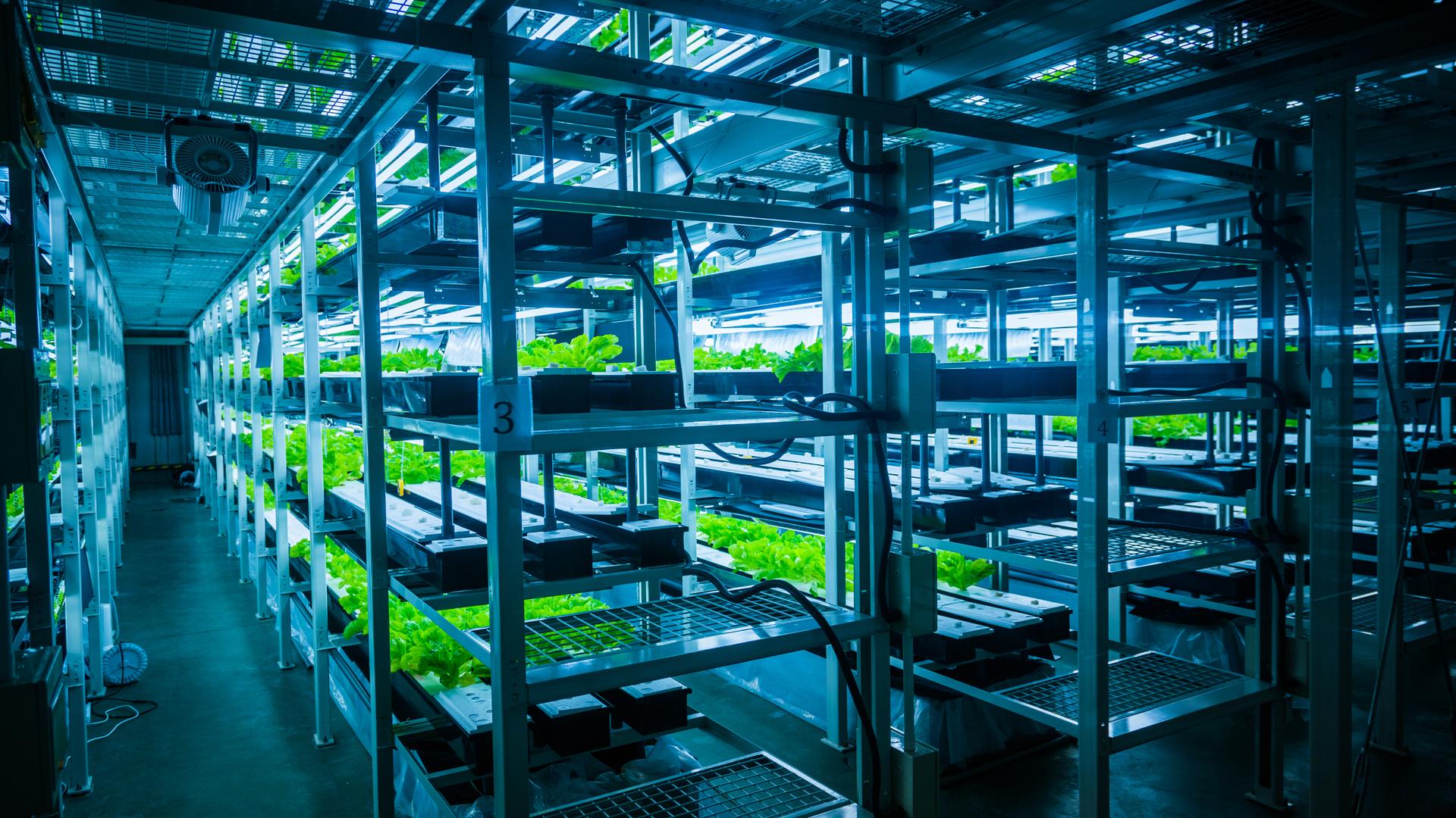 LED verlichting kwekerij